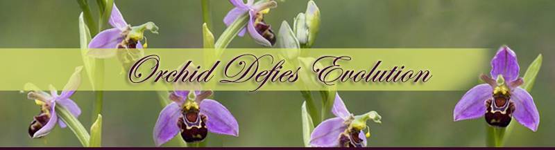 Orchids Defy Evolution