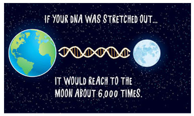 Strands of DNA reaching the moon