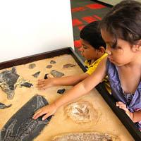 tour-museum-fossils