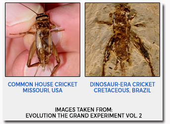 Crickets Living Fossil