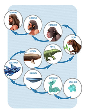 cycle of life images according to the evolution theory