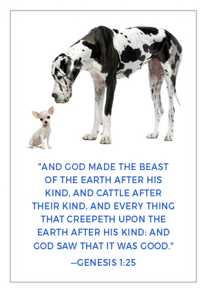 God create animals after their kind