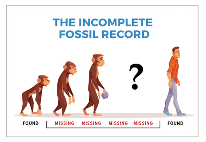 Monkey to man fossil record